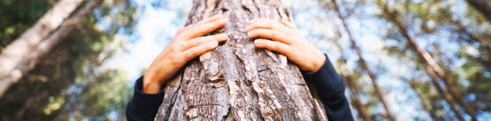 tree-remembers-urna-arbol-funeraria-malaga