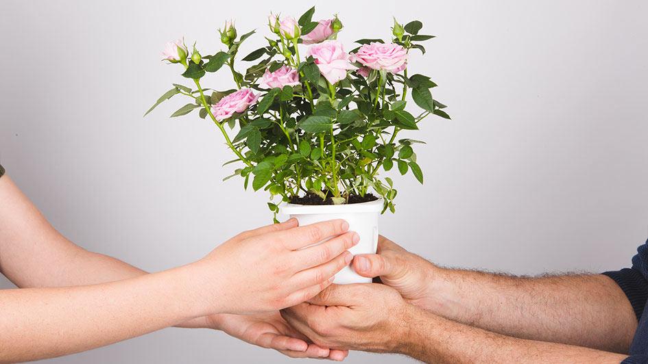 corona-flores-ecologica-green-memory-malaga