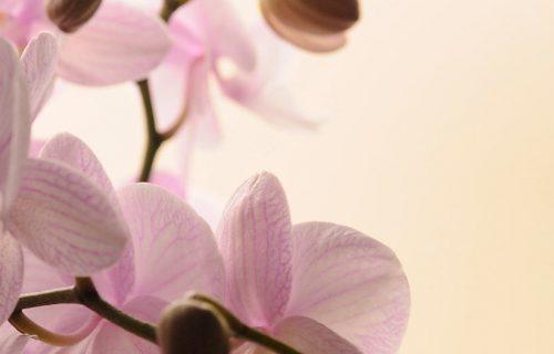 orquideas-funeraria-malaga-planes-personalizados